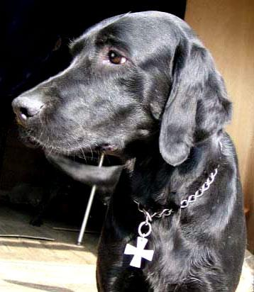 dogcross2